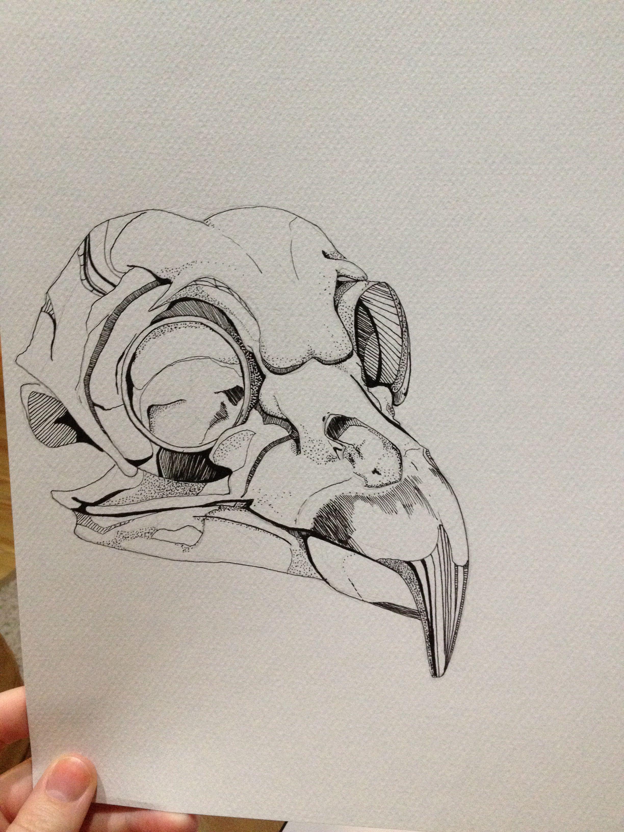 Bird Skull Drawing Done In Ink Pen Art Is For Winners Pinterest