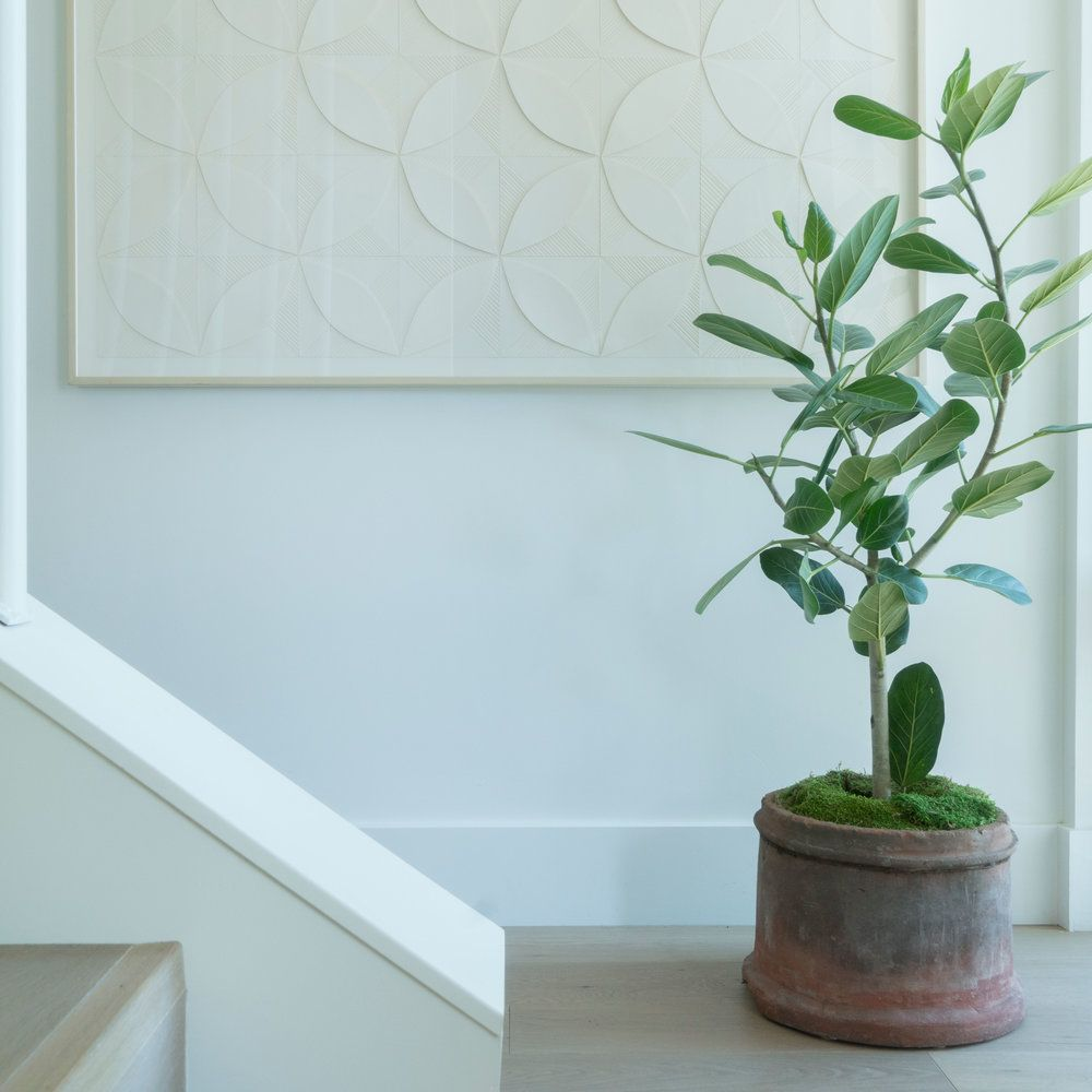 how to pot your houseplant like a pro
