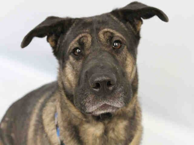 Adopt a Pet in Colorado Springs Humane Society of the