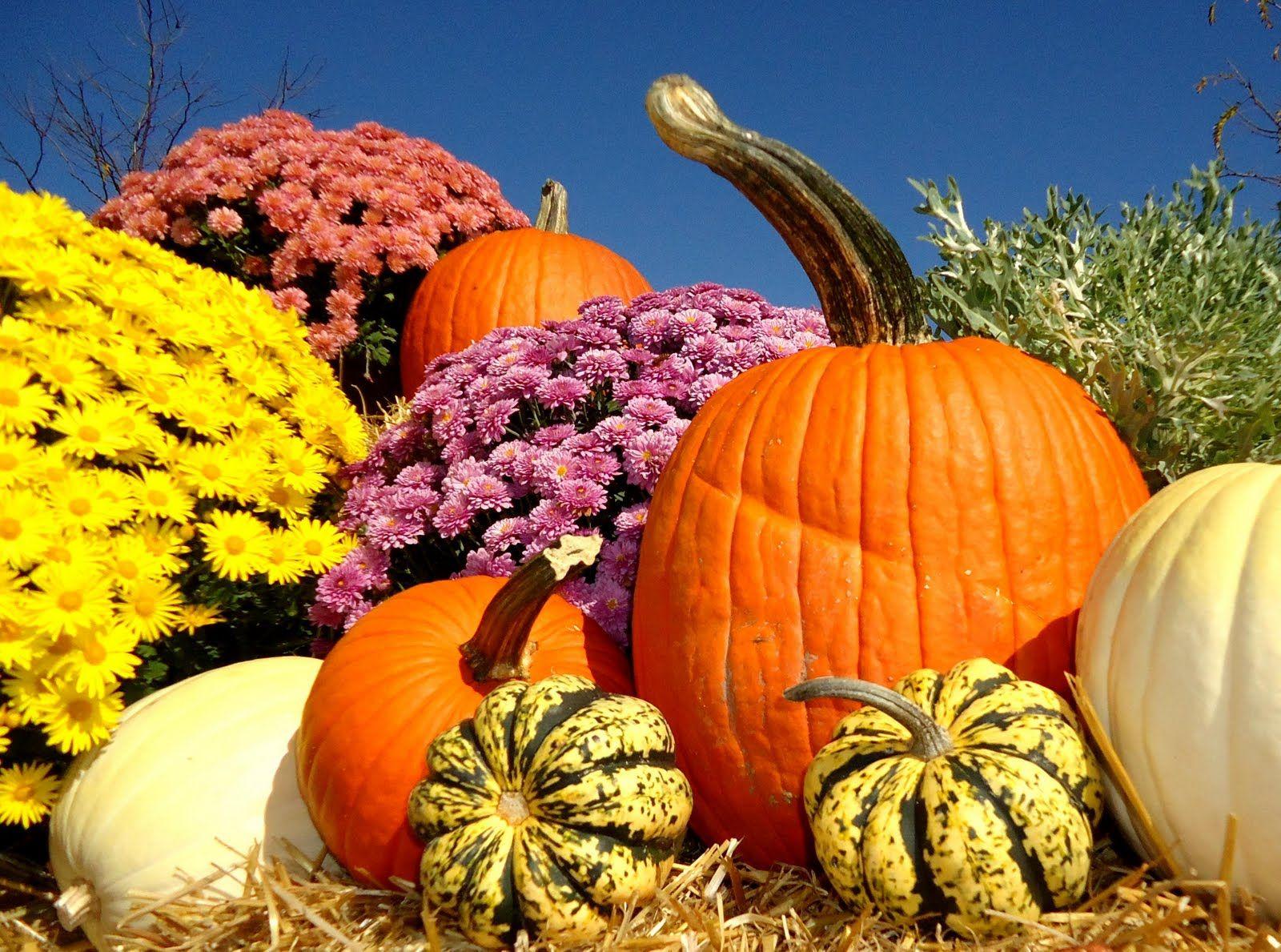 fall scenes with pumpkins bing images - Fall Pumpkins