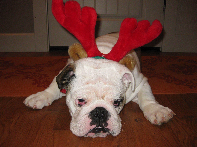 my favorite reindeer