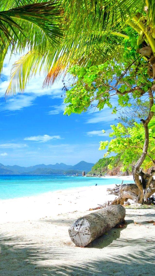 Arena blanca y palmas playas en 2019 paisajes playa paisaje tropical y playa - Playa wallpaper ...