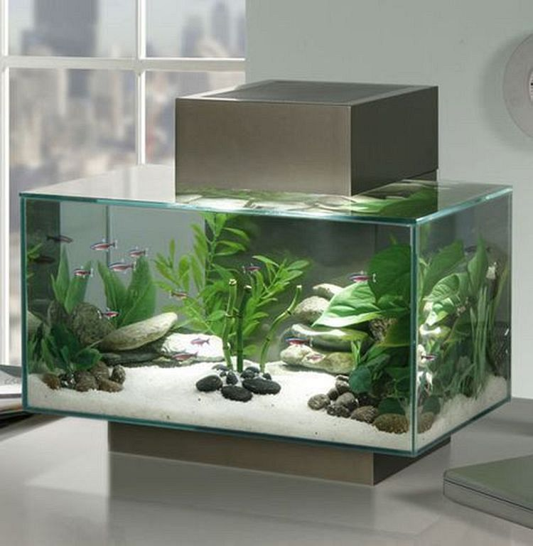 Home Aquarium Design Ideas: Beautiful Fish Tank Ideas For Relaxing Home Engineering