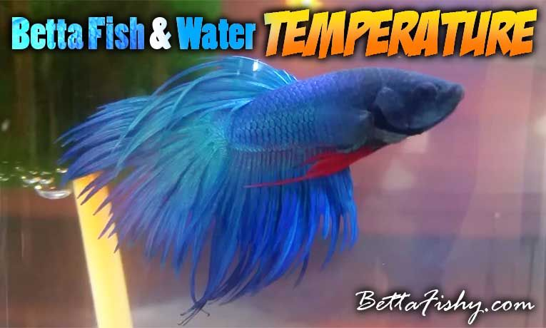 34+ What temperature do bettas like information