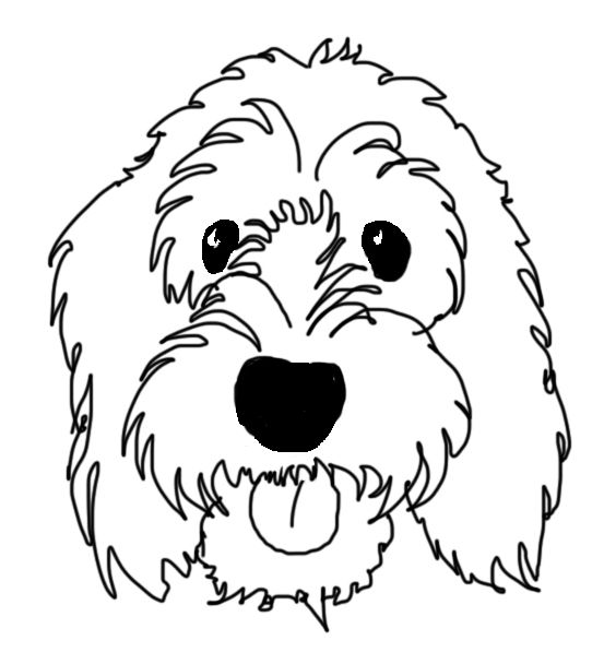 My Name Is Boris Dogs Cockapoo Labradoodle Drawing Drawings