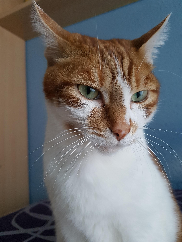 Reddit meet Conan ) Cute cats, kittens, Cats, Funny cats
