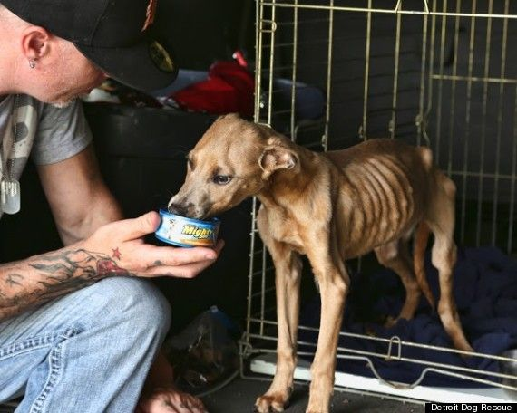 Detroit Animal Control Shelter Rescues Getting Dogs From Them