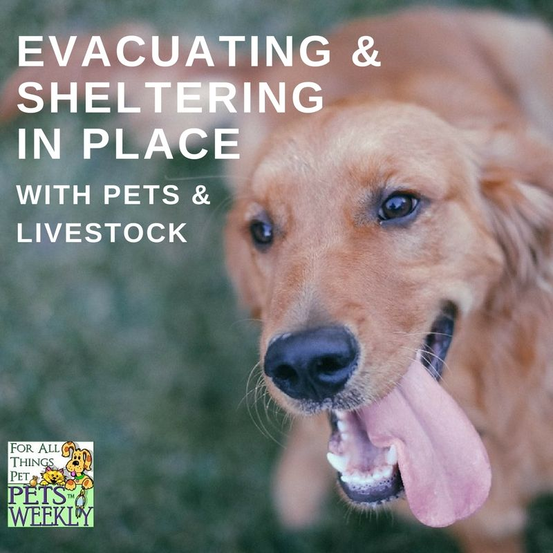 Evacuating Or Sheltering In Place With Pets In Disasters Pets Vet Jobs Pet Names