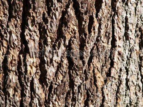 Google Image Result for http://www.nichefoto.com/preview/2006/11/18/tree_bark__corce_darbre_avidimages_1212_prev.jpg