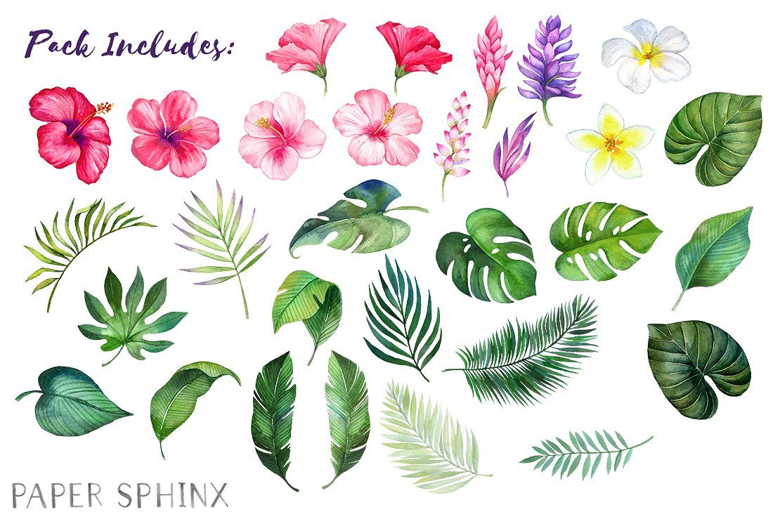 watercolor tropical flowers clipart by papersphinx on creativemarket [ 1100 x 732 Pixel ]