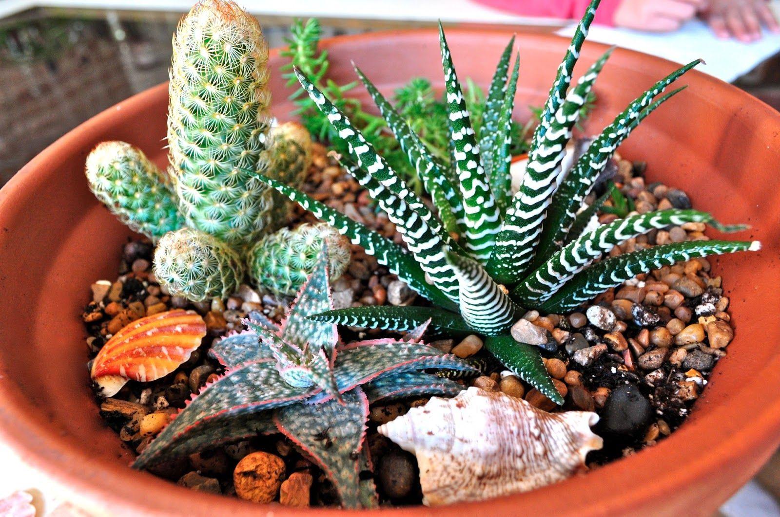 Succulent dish garden ideas my moms cactussucculent dish garden succulent dish garden ideas my moms cactussucculent dish garden she used the workwithnaturefo