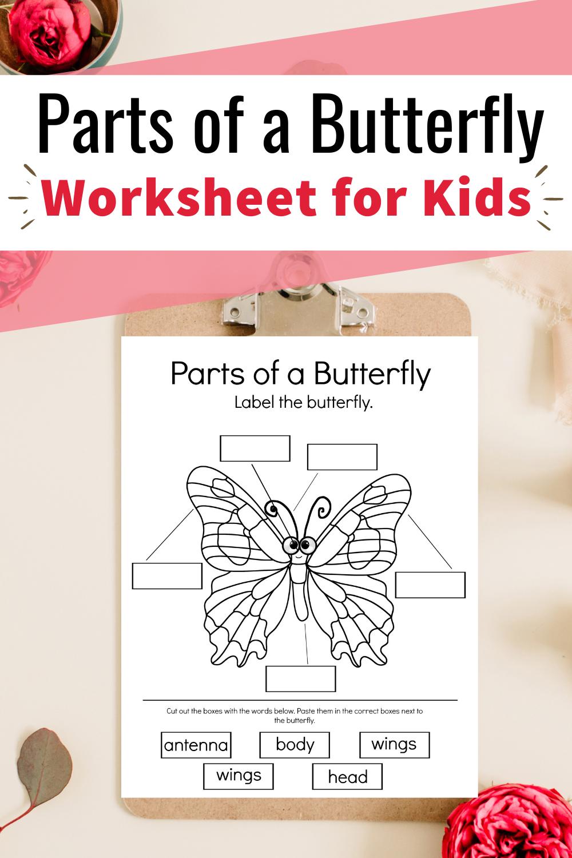 Predownload: Printable Parts Of A Butterfly Worksheet For Preschool In 2021 Butterfly Books Preschool Preschool Activity [ 1500 x 1000 Pixel ]
