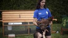 Rent The Chicken Rentthechicken Profile Pinterest