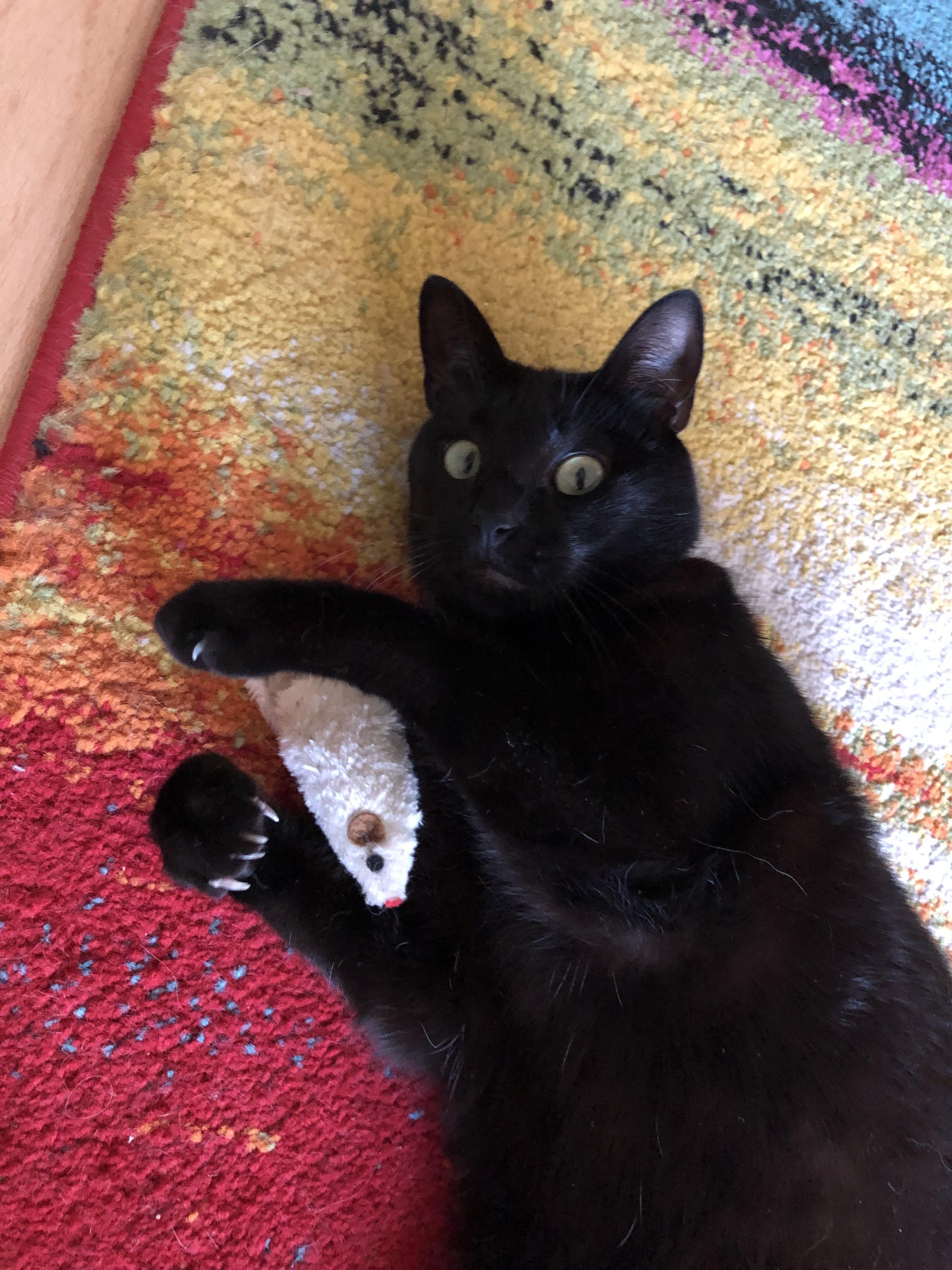 Iris Paula And Her Dangerous Claws Cats Kitty Animals