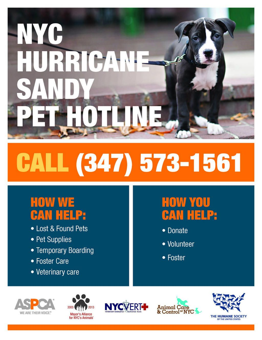 NYCLASS on Hurricane sandy, Veterinary care, Find pets