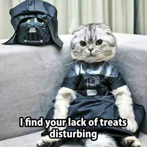 Darth Kitty