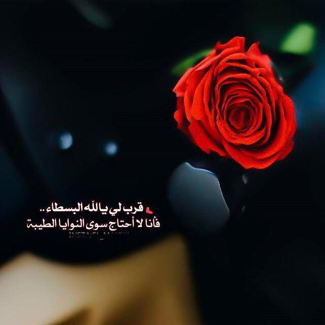 Pin By بنت محمد On يارب Flowers Plants Pics
