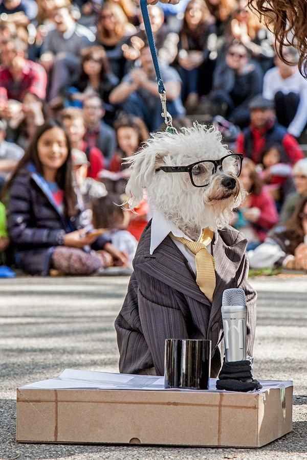 Devo Dog Hedwig The Angry Dog Ira Glass Dog 77 Photos From The