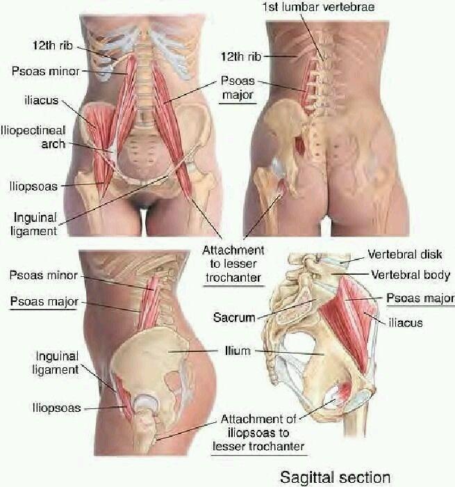 Anatomie körper frau Die weiblichen