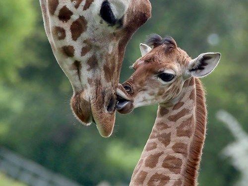 I Love You Too, Mama!
