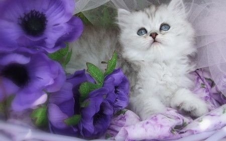 adorable kittens in purple - Google Search