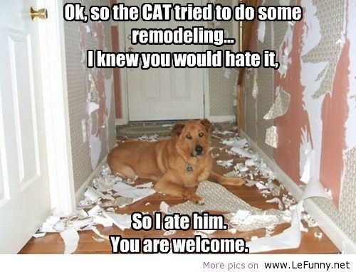 Image result for funny animal jokes