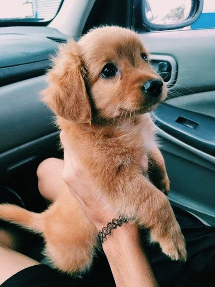 29 Puppies Who Are Far Too Cute For This World Cute Animals