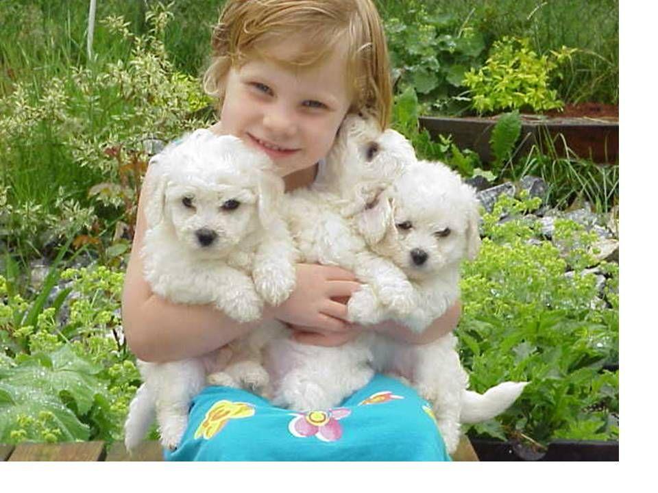 Razas de perros peque os para ni os alergicos razas caninas ideales para ni os al rgicos hoy - Casas para perros pequenos ...
