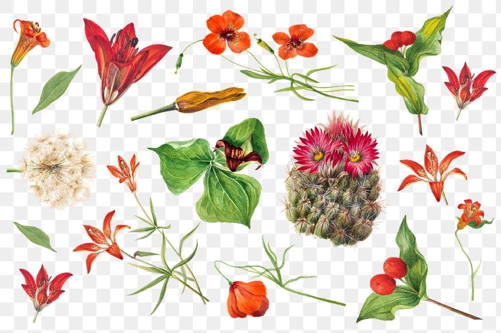 Download Free Png Of Vintage Red Orange And Pink Flower Png Sticker Set About Art Print Botanical Pink Floral S In 2021 Cactus Illustration Poppy Flower Floral Sets