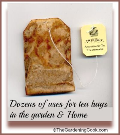 Dozens of uses for tea bags in the garden and home.