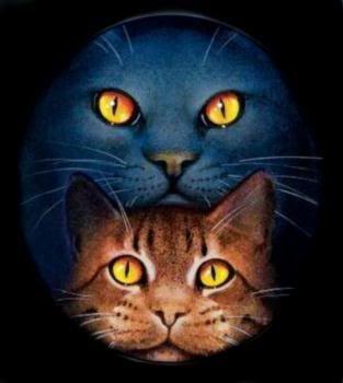Warrior cats stormfur and brook