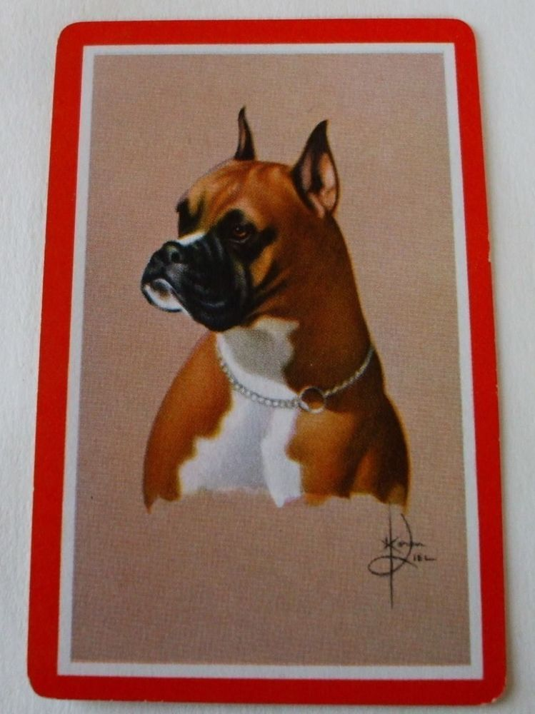 Vintage Swap Playing Card/ blank back.  Boxer/Dog Portrait(1) card
