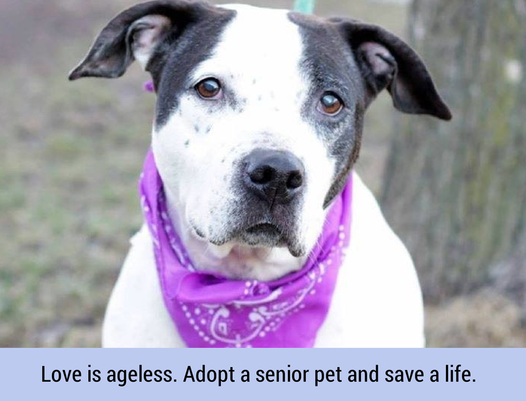 Love is ageless. Adopt a senior pet and save a life.