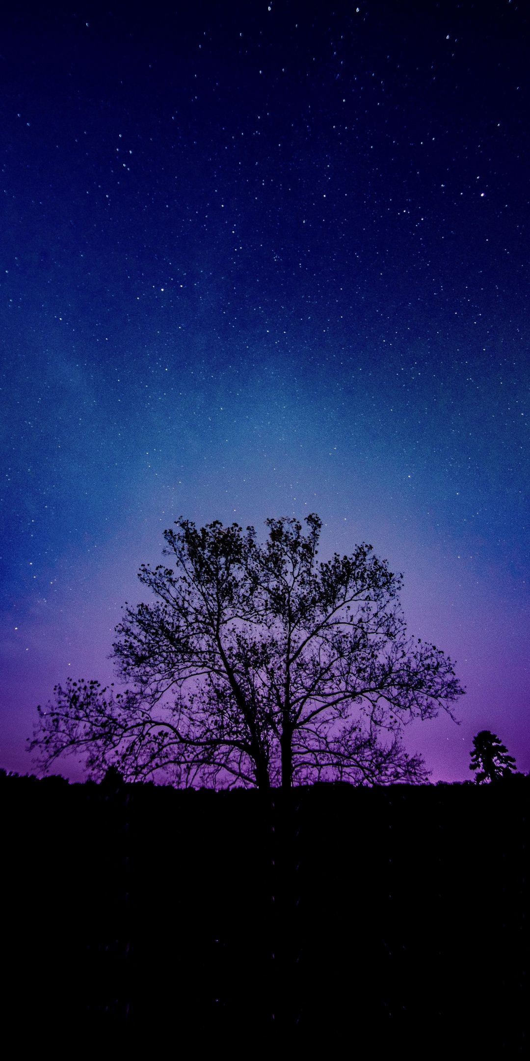 Tree Galaxy Sky Silhouette 1080x2160 Wallpaper Night Sky Wallpaper Galaxy Phone Wallpaper Phone Wallpaper