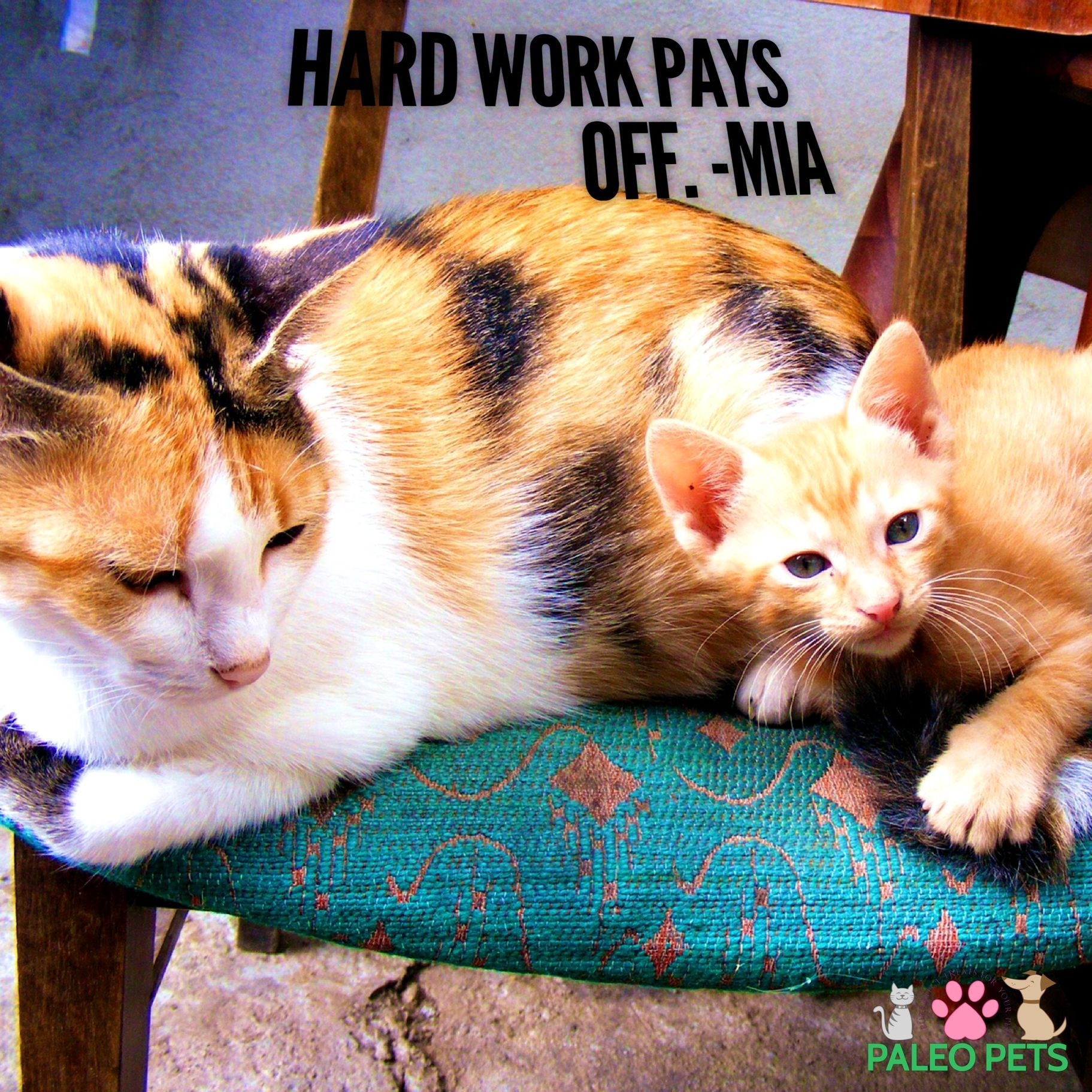 Happy Tuesday. Hard work pays off! 😸 Cats Pets Animals