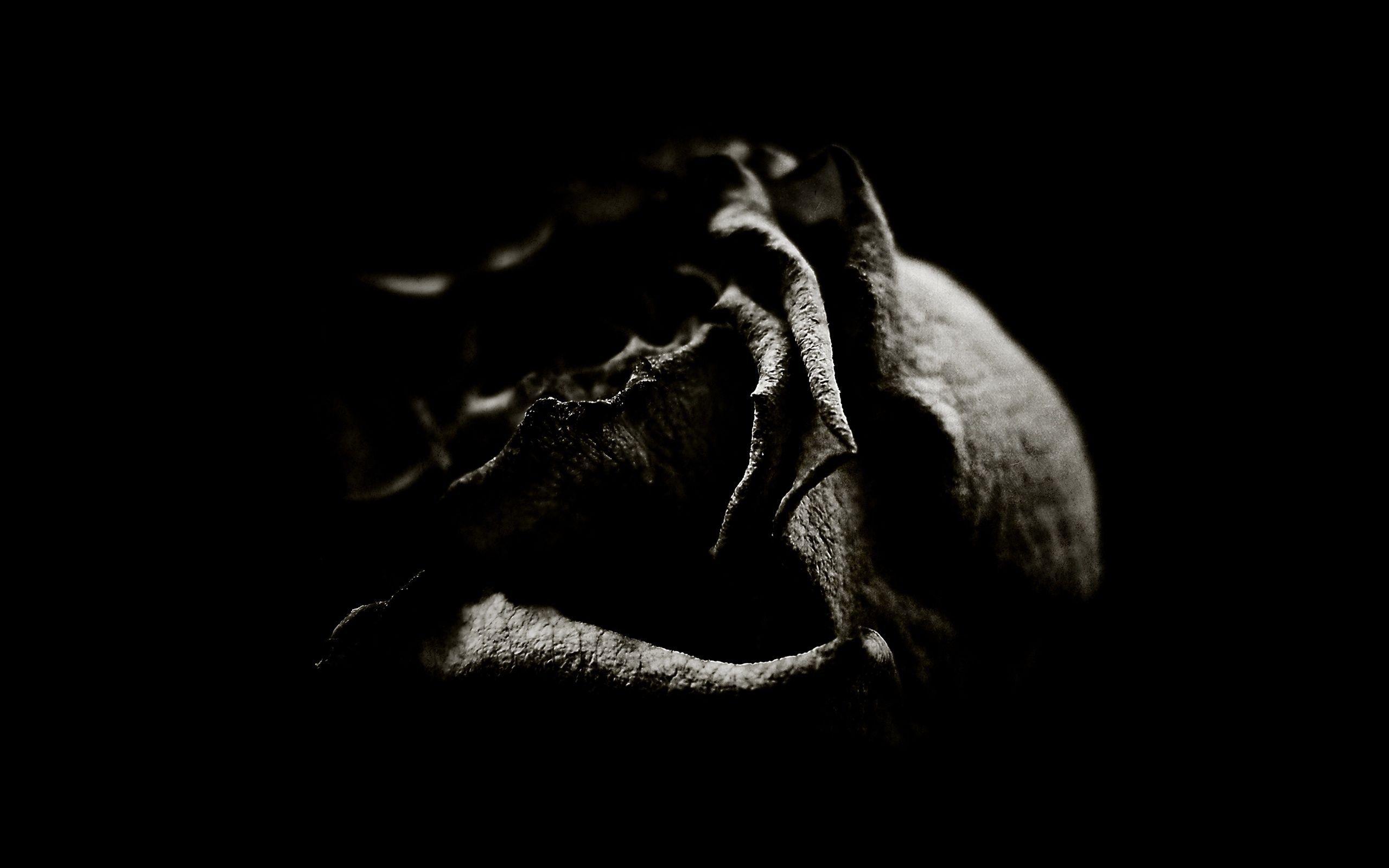 Beautiful black rose wallpaper ololoshenka pinterest rose beautiful black rose wallpaper izmirmasajfo