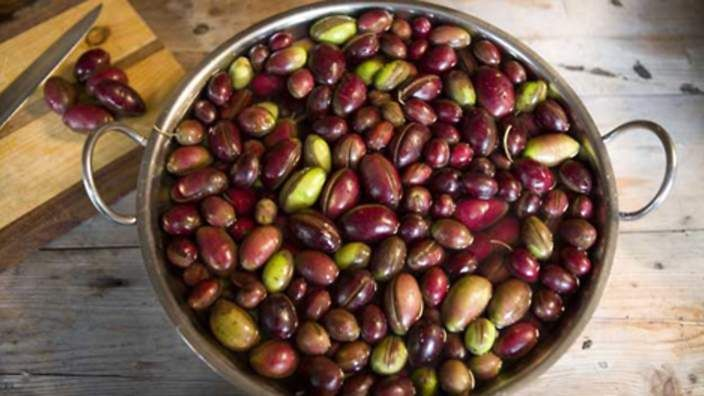 olive pickling recipe 3 kg olives, mixed green and black (picked before becoming fully ripe) 300 ml vinegar  handful of coarse salt  1 tbsp sugar  water
