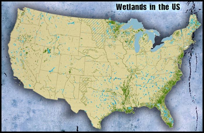 Shown in the picture is where the aquatic wetland biome can be shown in the picture is where the aquatic wetland biome can be found in the us gumiabroncs Images