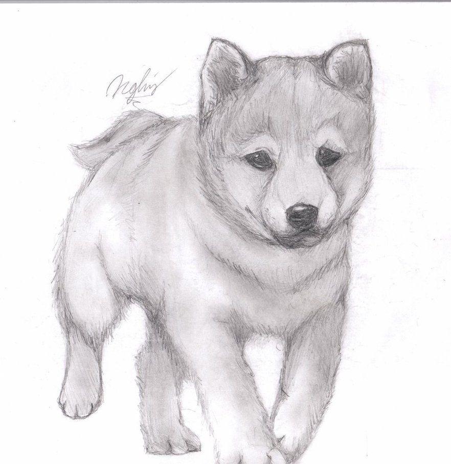 Нарисовать картинки животные