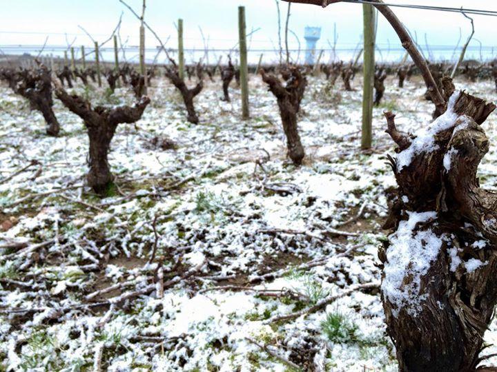 Les vignes enneigées en #Muscadet au Domaine Vinet #LoireHiver https://www.facebook.com/domainesvinetmuscadet?fref=photo