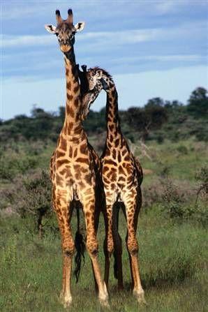 from Jaiden gay girafe