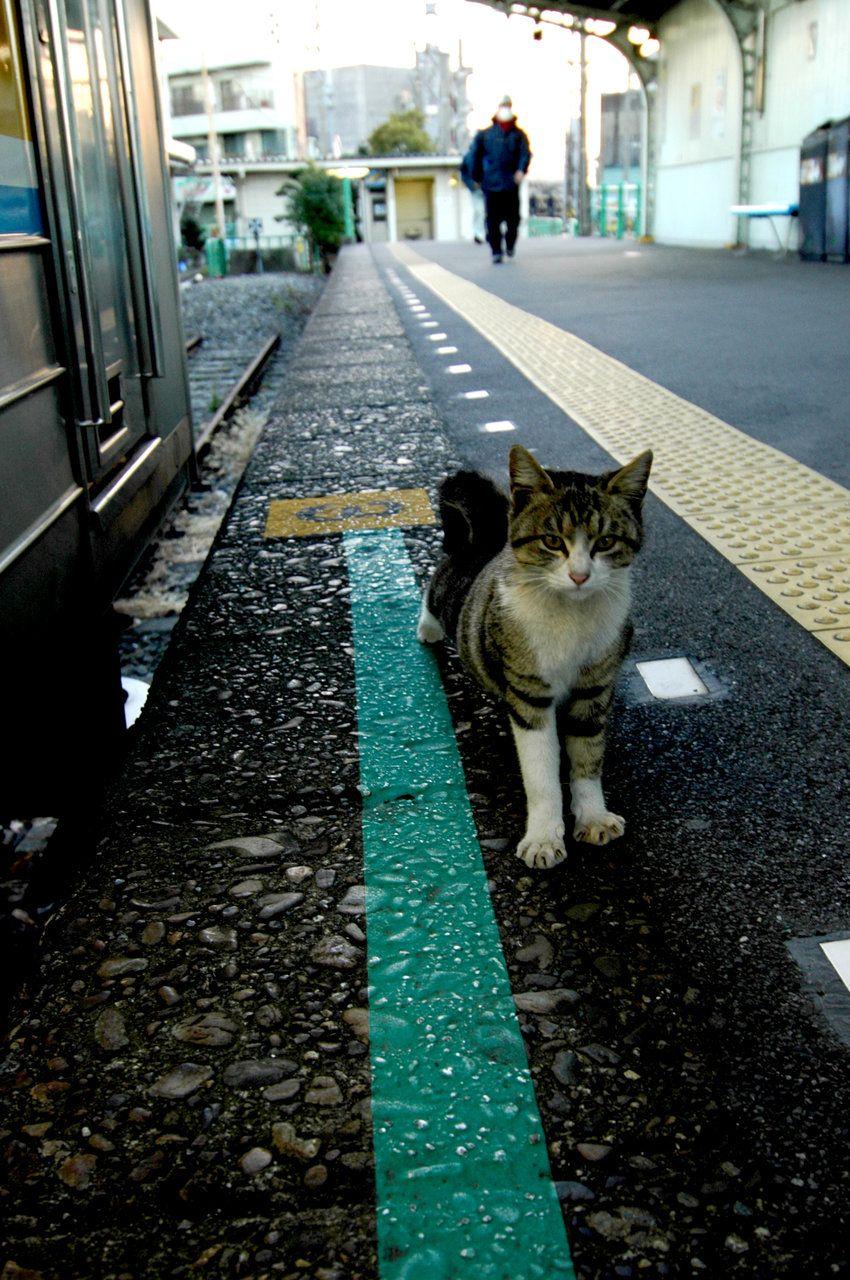 City Cat Adventure Cat Cat City Cats