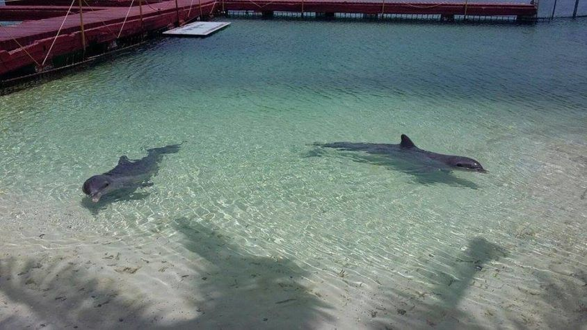 TWO DOLPHINS KEPT IN FEW METERS OF WATER IN THE BEACH, FORCED TO PLAY AND SWIM WITH TOURISTS – BOYCOTT THIS PLACE!