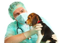 Looking For Pet Surgery Upper Canada Animal Hospital Is A Well