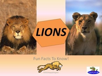 Lions Powerpoint Fun Facts About Lions By Happyedugator Teachers Pay Teachers Fun Facts About Lions Lion Facts Fun Facts