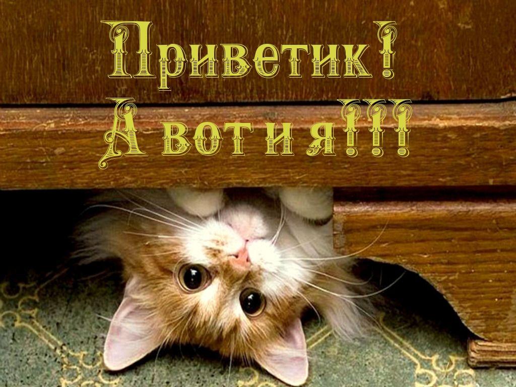 Картинки приветик котик прикольные, картинки