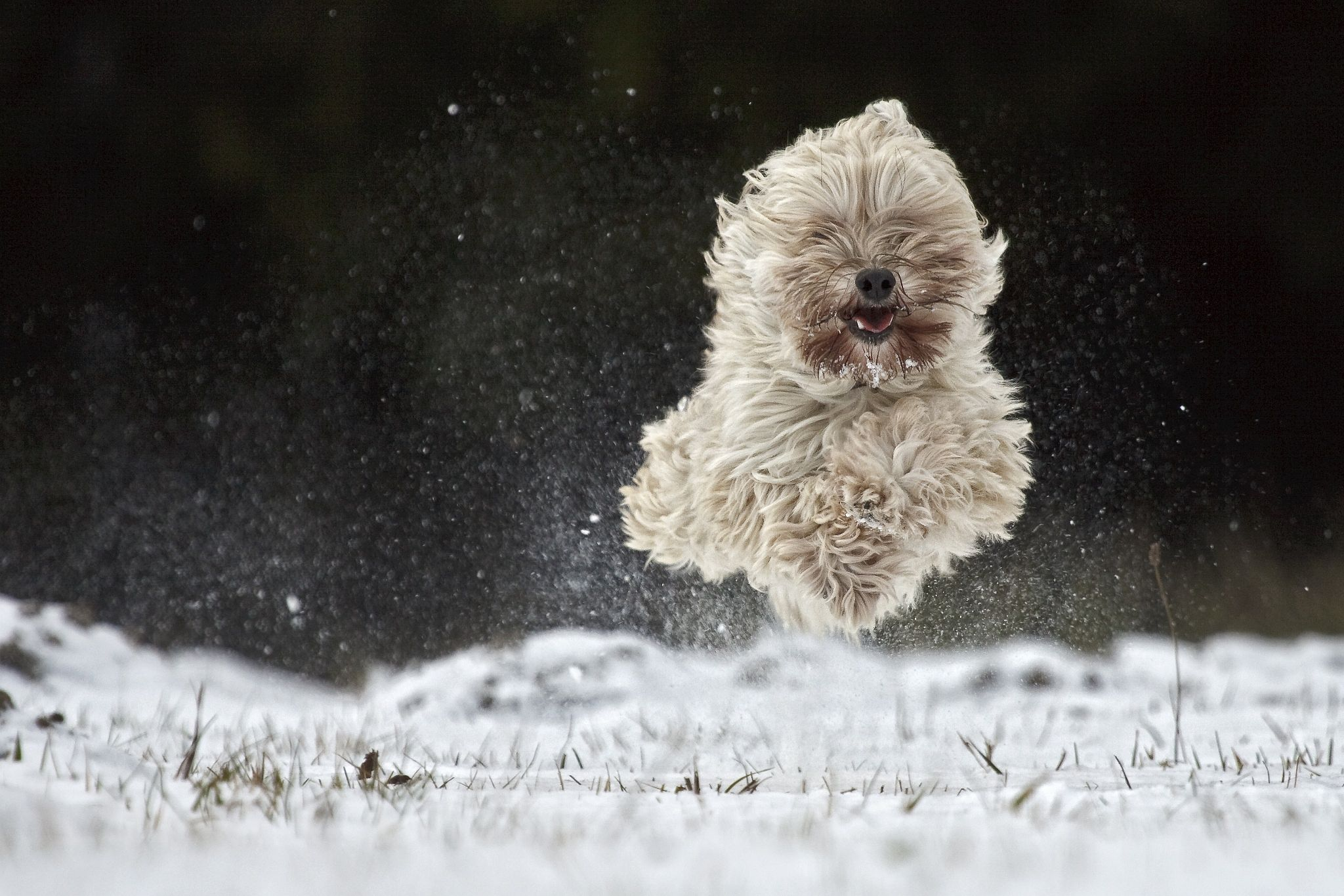 flying Pacco by Manfred Karisch on 500px