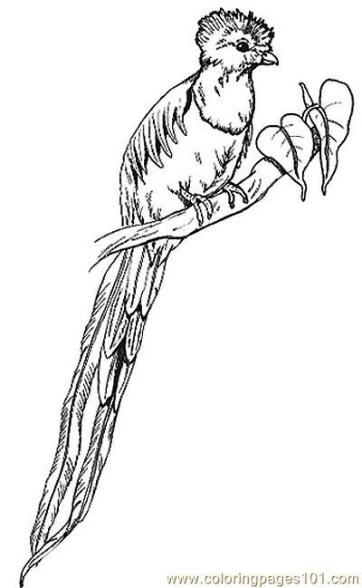 Good Quetzal Birds Pictures | Quetzal Bird Coloring Page Pictures