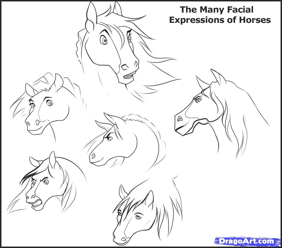 Facial Expressions Horse How To Draw Horse Heads Step 1 Now, This Is A  Sketch
