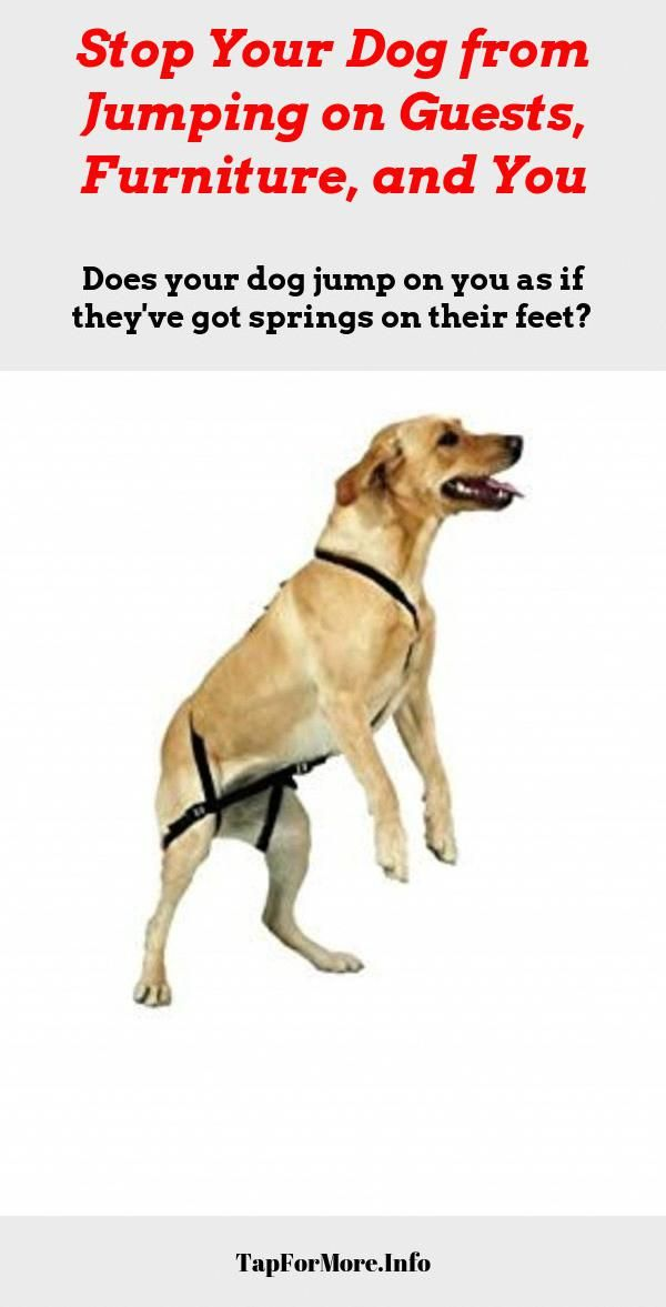 Stop Dog Jumping And Dog Training Barking Check The Pin For Lots